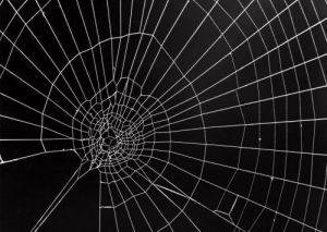 2d-web-vergelijkbaar-met-sterkteberekenings-2d-mesh